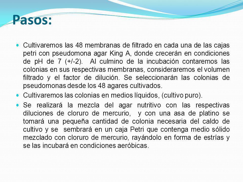 Pasos: Cultivaremos las 48 membranas de filtrado en cada una de las cajas petri con pseudomona agar King A, donde crecerán en condiciones de pH de 7 (