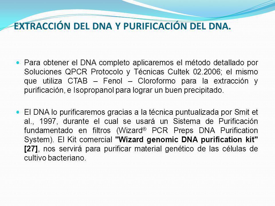 EXTRACCIÓN DEL DNA Y PURIFICACIÓN DEL DNA. Para obtener el DNA completo aplicaremos el método detallado por Soluciones QPCR Protocolo y Técnicas Culte