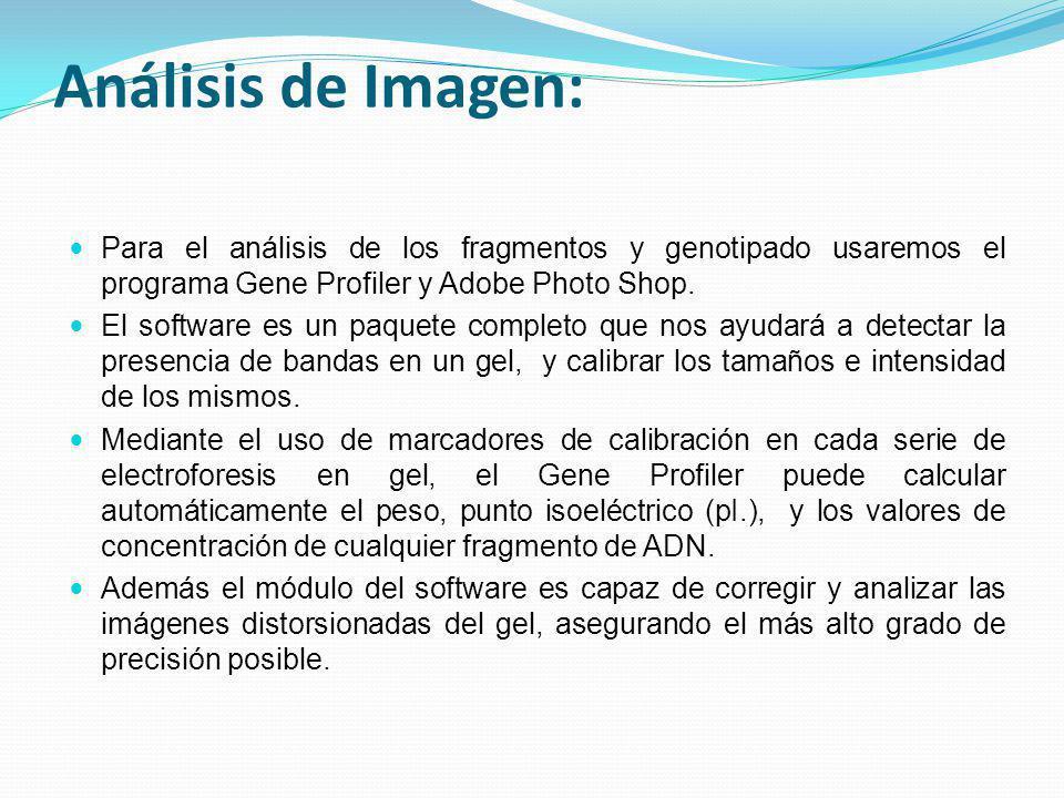 Análisis de Imagen: Para el análisis de los fragmentos y genotipado usaremos el programa Gene Profiler y Adobe Photo Shop. El software es un paquete c