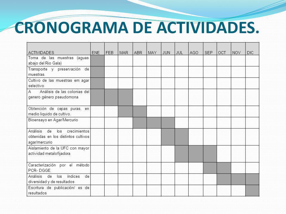 CRONOGRAMA DE ACTIVIDADES. ACTIVIDADESENEFEBMARABRMAYJUNJULAGOSEPOCTNOVDIC Toma de las muestras (aguas abajo del Rio Gala) Transporte y preservación d