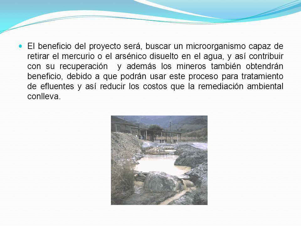 El beneficio del proyecto será, buscar un microorganismo capaz de retirar el mercurio o el arsénico disuelto en el agua, y así contribuir con su recup