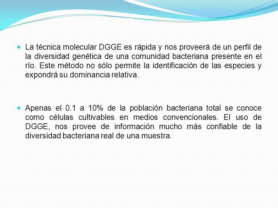 La técnica molecular DGGE es rápida y nos proveerá de un perfil de la diversidad genética de una comunidad bacteriana presente en el río. Este método