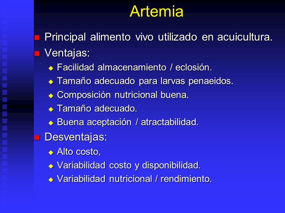 Diatomeas Pennadas Benticas