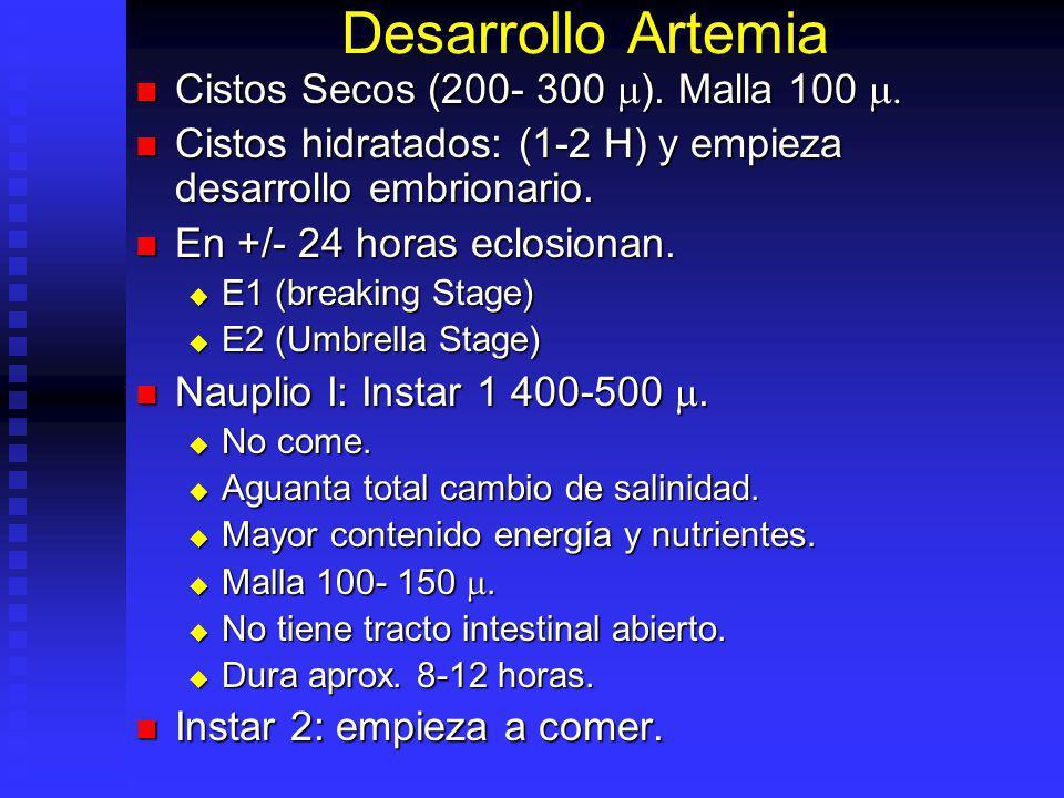 Umbrella Stage & Instar 1 Umbrella (E-2) Instar 1
