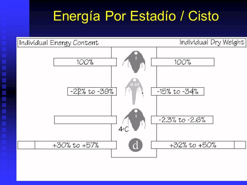 Desarrollo Artemia Cistos Secos (200- 300 ). Malla 100 Cistos Secos (200- 300 ). Malla 100 Cistos hidratados: (1-2 H) y empieza desarrollo embrionario