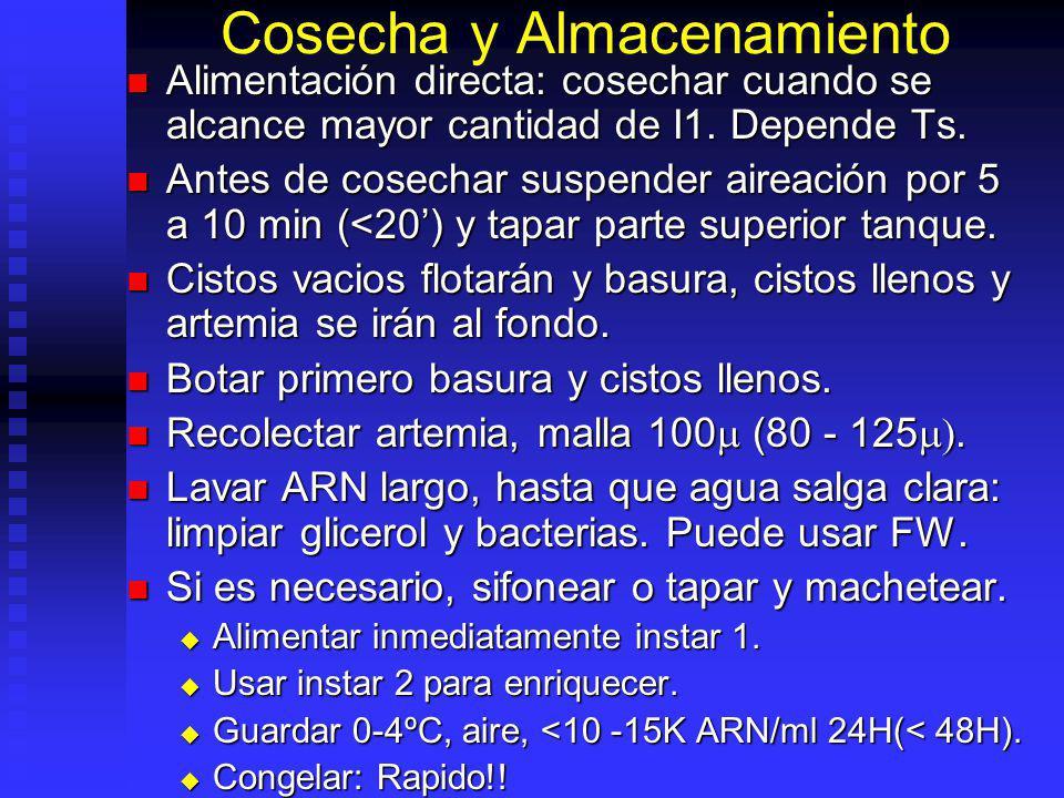 Procedimientos de Desinfección Remojar cistos 1- 2 horas en 20 ppm cloro. Remojar cistos 1- 2 horas en 20 ppm cloro. 10 litros / 500gr cistos. 10 litr