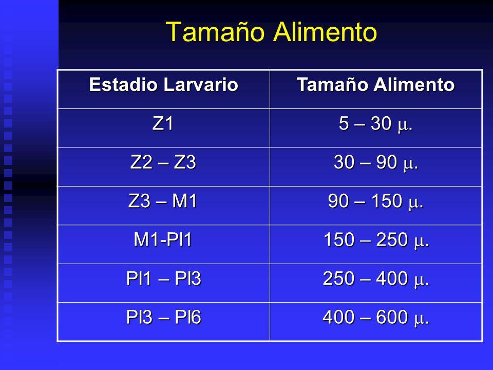 Tamaño Alimento Estadio Larvario Tamaño Alimento Z1 5 – 30.