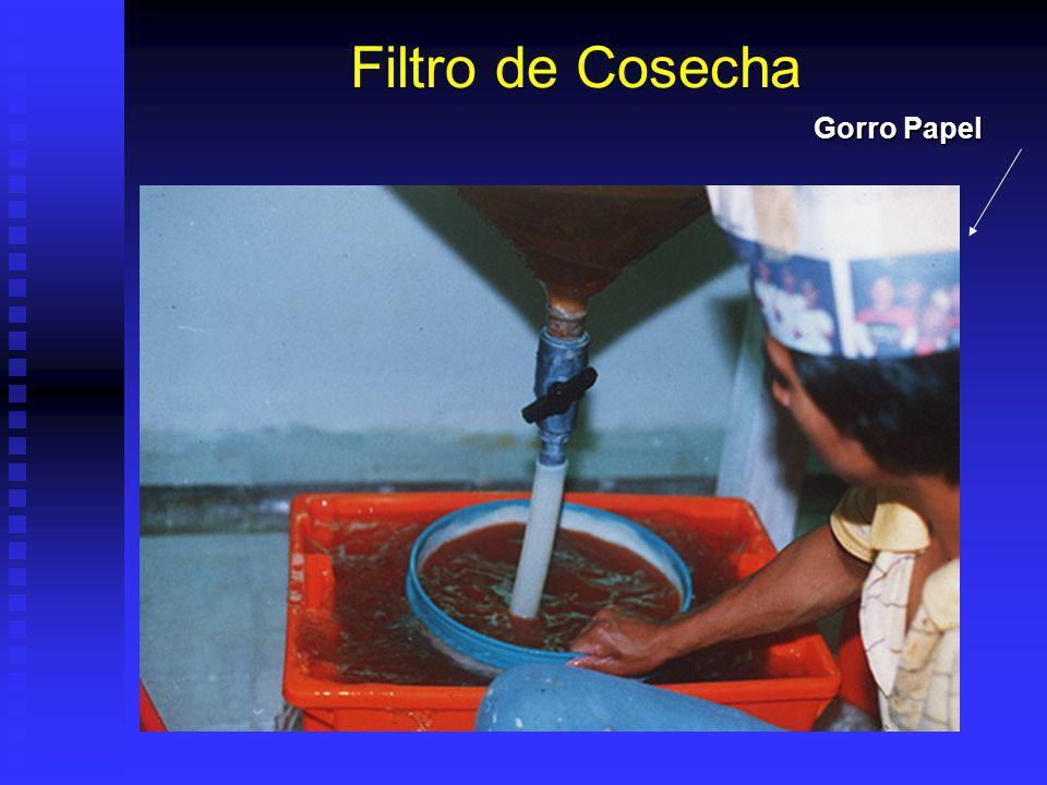 Fondo de Tanques en CosechaCistos ARN Balde Cosecha Y Cama Agua