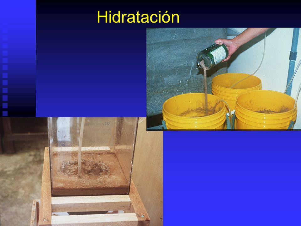 Remoción completa corion solo puede darse con huevos esfericos. Remoción completa corion solo puede darse con huevos esfericos. 1- 2 Horas en agua dul