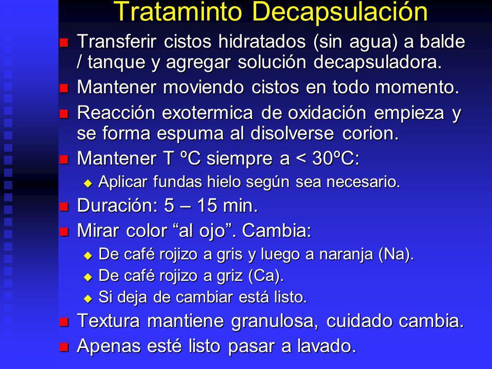 Ejemplo con Hipoclorito Sodio Cistos a decapsular = 100 g.