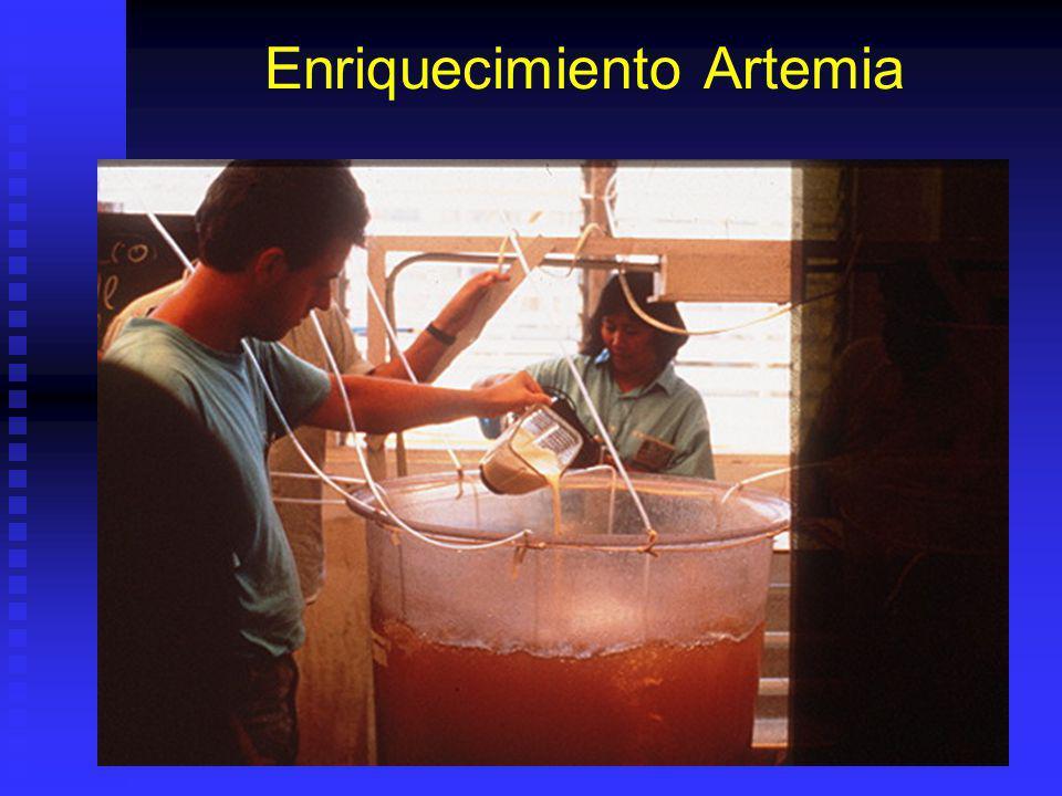 Bionecapsulación Enriquecimiento Artemia Aumentar valor nutricional de artemia y otros organismos por bioencapsulación. Aumentar valor nutricional de
