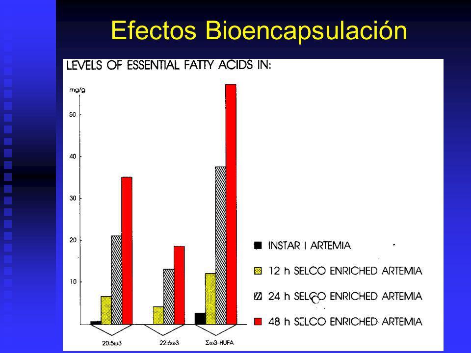 Artemia Enriquecida