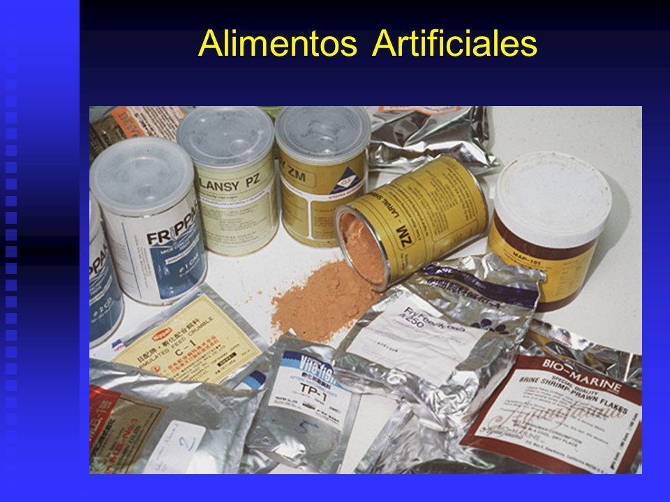 Alimentos Artificiales Tipos: Tipos: Microparticulados. Microparticulados. Microencapsulados. Microencapsulados. Flake. Flake. Crumble. Crumble. Venta