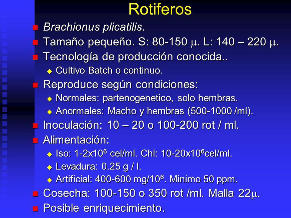 Trocoforas Ostras Alto contenido grasas. Hasta 15% HUFA. Alto contenido grasas. Hasta 15% HUFA. Facil producción / almacenamiento. Facil producción /