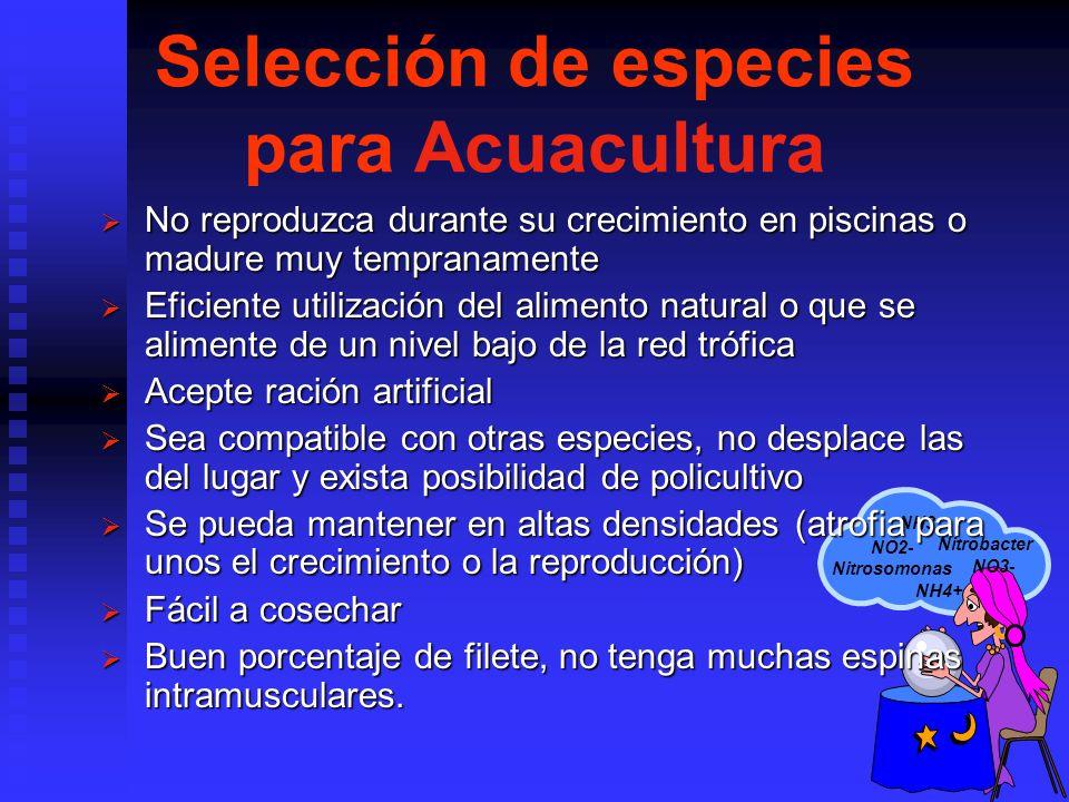 NH3 NH4+ Nitrobacter NO2- Nitrosomonas NO3- Selección de especies para Acuacultura No reproduzca durante su crecimiento en piscinas o madure muy tempranamente No reproduzca durante su crecimiento en piscinas o madure muy tempranamente Eficiente utilización del alimento natural o que se alimente de un nivel bajo de la red trófica Eficiente utilización del alimento natural o que se alimente de un nivel bajo de la red trófica Acepte ración artificial Acepte ración artificial Sea compatible con otras especies, no desplace las del lugar y exista posibilidad de policultivo Sea compatible con otras especies, no desplace las del lugar y exista posibilidad de policultivo Se pueda mantener en altas densidades (atrofia para unos el crecimiento o la reproducción) Se pueda mantener en altas densidades (atrofia para unos el crecimiento o la reproducción) Fácil a cosechar Fácil a cosechar Buen porcentaje de filete, no tenga muchas espinas intramusculares.