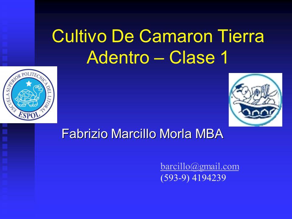Cultivo De Camaron Tierra Adentro – Clase 1 Fabrizio Marcillo Morla MBA barcillo@gmail.com (593-9) 4194239