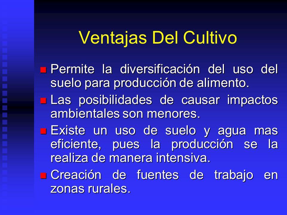 Ventajas Del Cultivo Permite la diversificación del uso del suelo para producción de alimento. Permite la diversificación del uso del suelo para produ