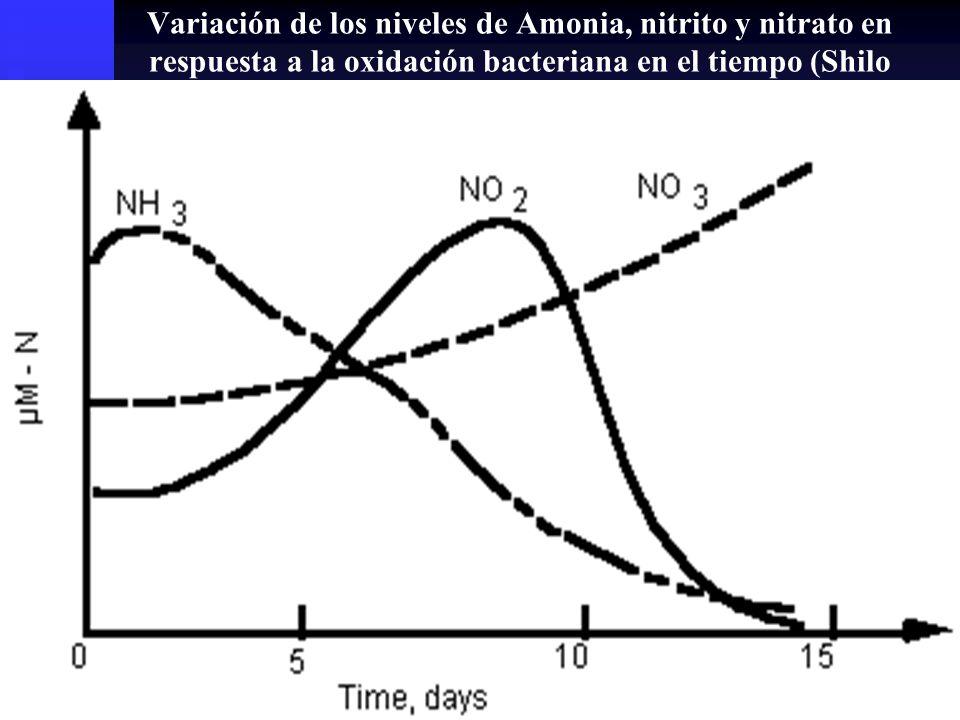 Variación de los niveles de Amonia, nitrito y nitrato en respuesta a la oxidación bacteriana en el tiempo (Shilo and Rimon, 1982).