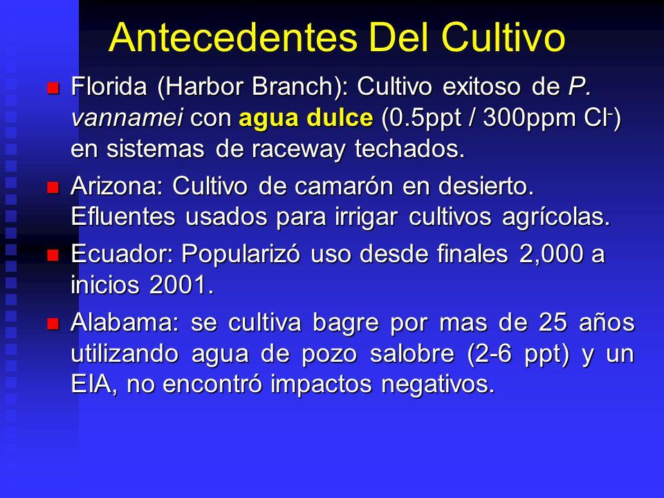 Antecedentes Del Cultivo Florida (Harbor Branch): Cultivo exitoso de P.