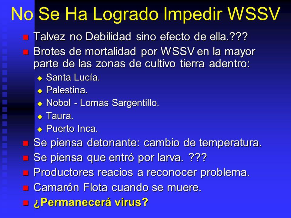 No Se Ha Logrado Impedir WSSV Talvez no Debilidad sino efecto de ella.??.