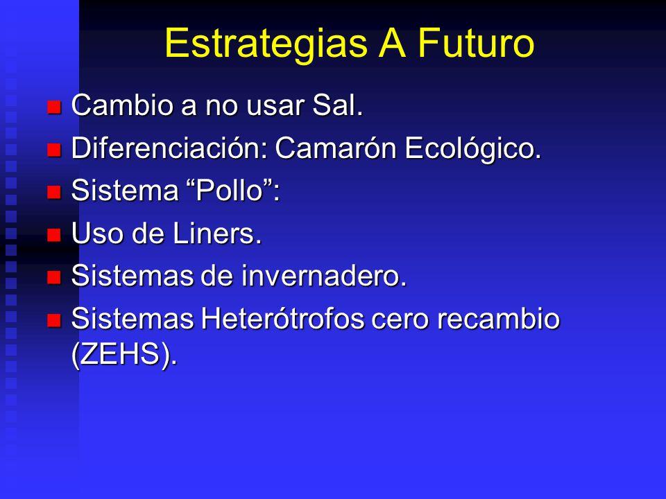 Estrategias A Futuro Cambio a no usar Sal.Cambio a no usar Sal.