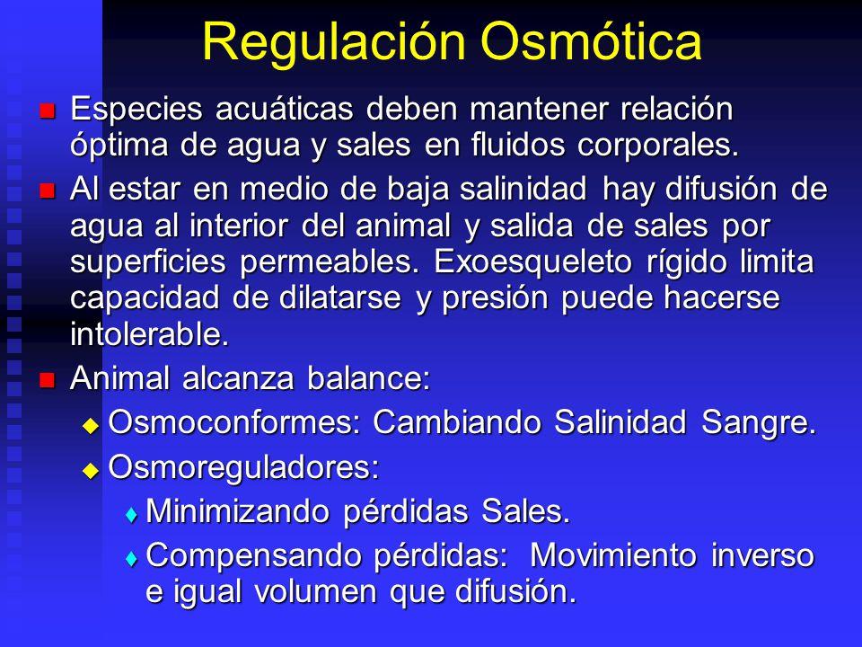 Regulación Osmótica Especies acuáticas deben mantener relación óptima de agua y sales en fluidos corporales. Especies acuáticas deben mantener relació