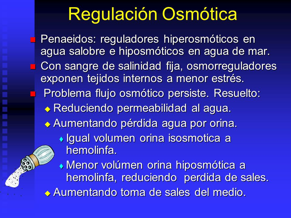 Regulación Osmótica Penaeidos: reguladores hiperosmóticos en agua salobre e hiposmóticos en agua de mar.