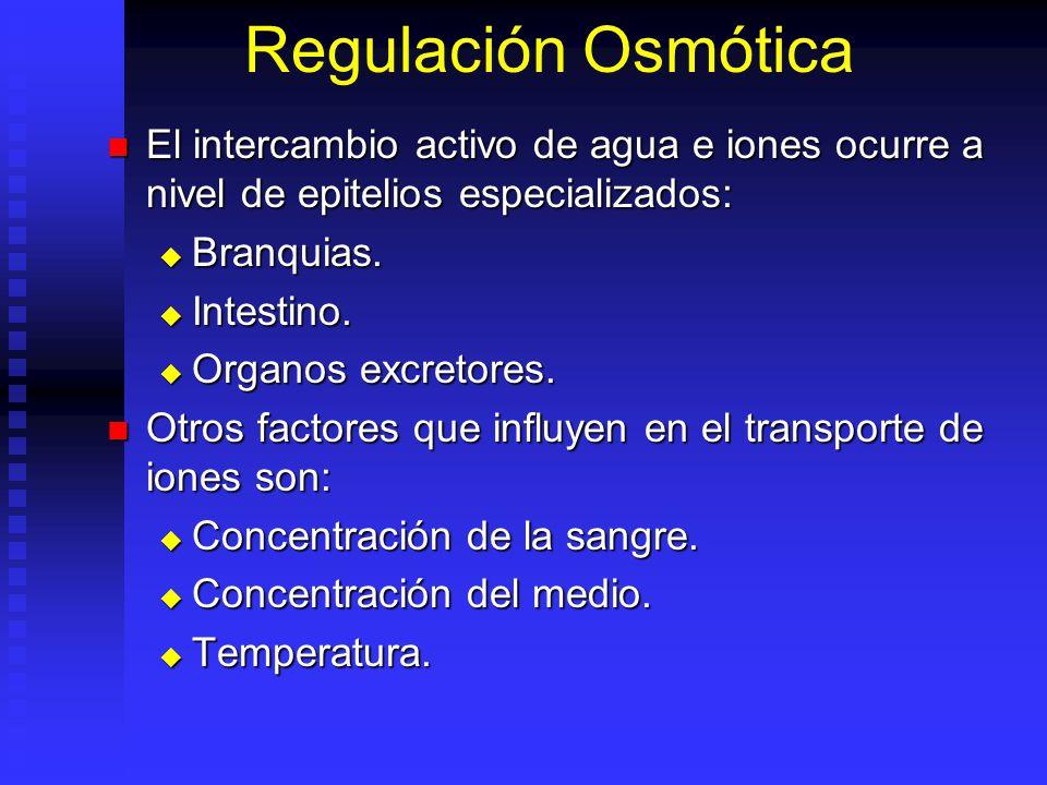 Regulación Osmótica El intercambio activo de agua e iones ocurre a nivel de epitelios especializados: El intercambio activo de agua e iones ocurre a nivel de epitelios especializados: Branquias.