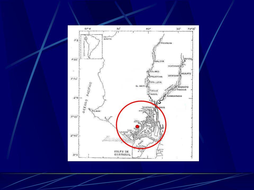 Descripción del sitio de las pruebas Área estuarina ubicada en el sector del Estero de El Ceibo, Provincia del Guayas.