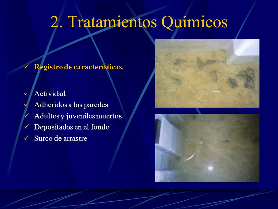 2.Tratamientos Químicos Registro de características.
