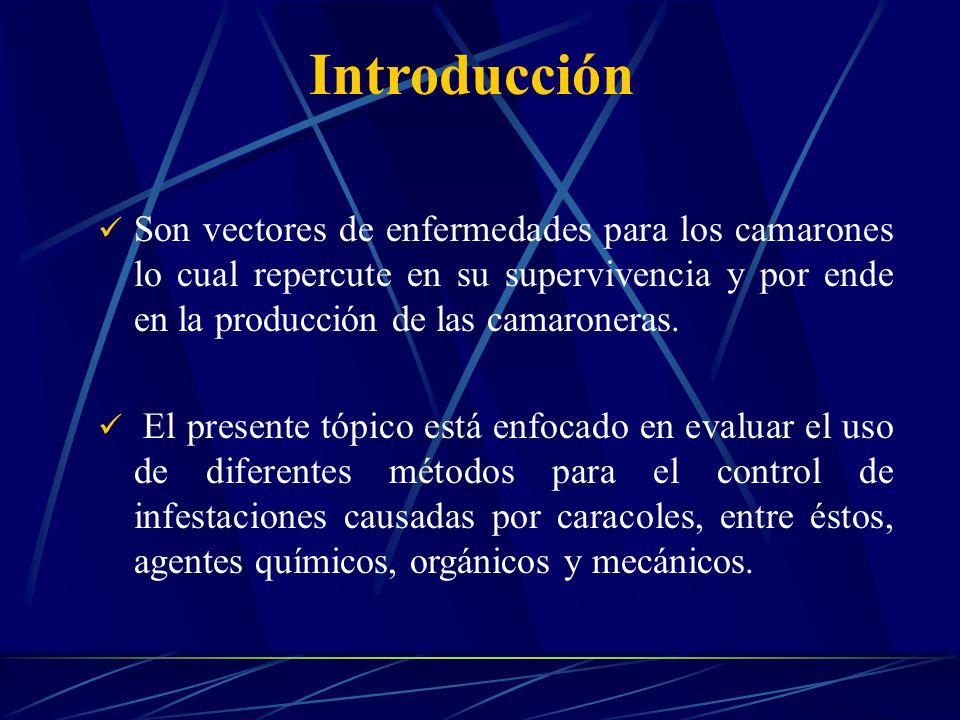 Son vectores de enfermedades para los camarones lo cual repercute en su supervivencia y por ende en la producción de las camaroneras.