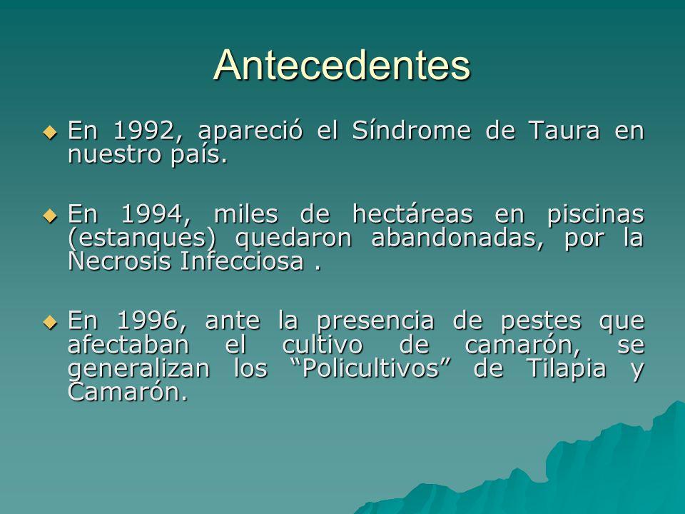 Antecedentes En 1992, apareció el Síndrome de Taura en nuestro país. En 1992, apareció el Síndrome de Taura en nuestro país. En 1994, miles de hectáre