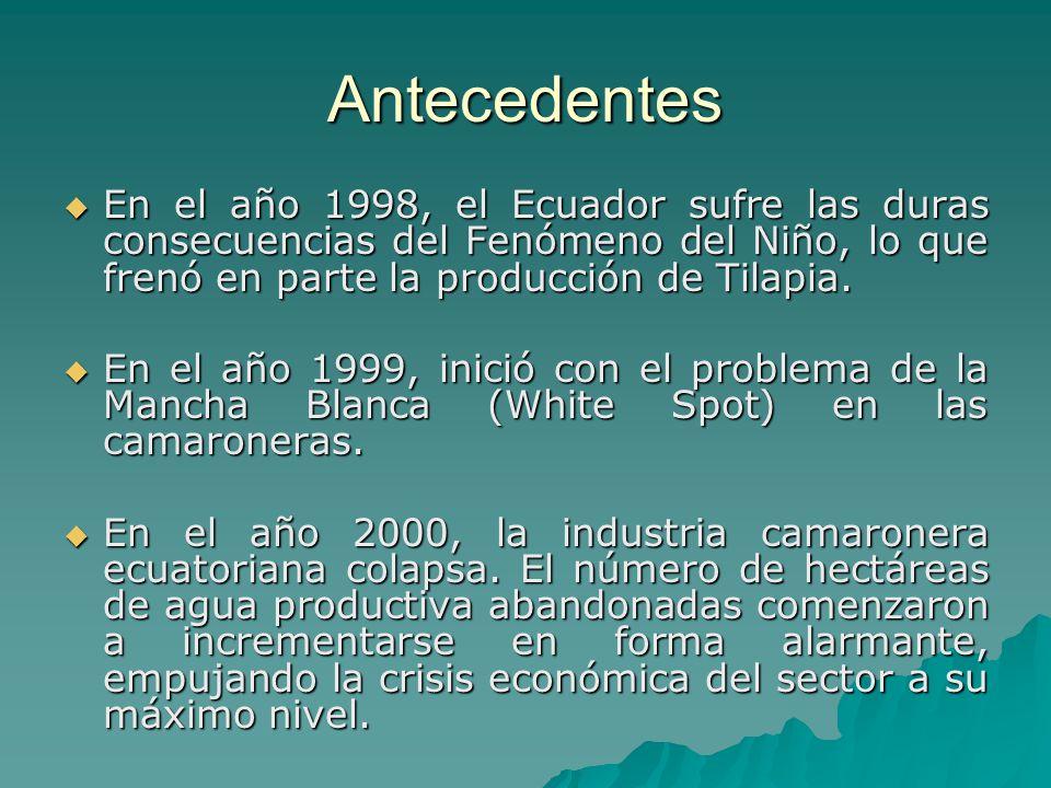 Antecedentes En el año 1998, el Ecuador sufre las duras consecuencias del Fenómeno del Niño, lo que frenó en parte la producción de Tilapia. En el año