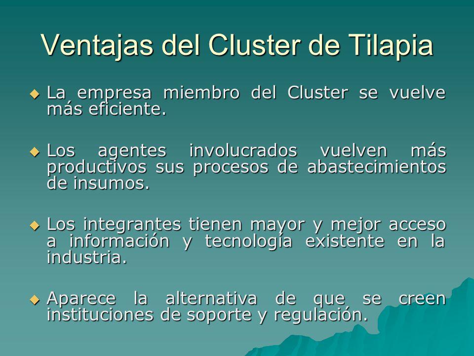 Ventajas del Cluster de Tilapia La empresa miembro del Cluster se vuelve más eficiente. La empresa miembro del Cluster se vuelve más eficiente. Los ag