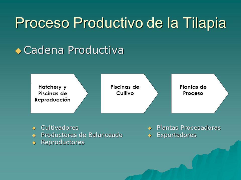 Proceso Productivo de la Tilapia Cadena Productiva Cadena Productiva Piscinas de Cultivo Plantas de Proceso Hatchery y Piscinas de Reproducción Cultiv