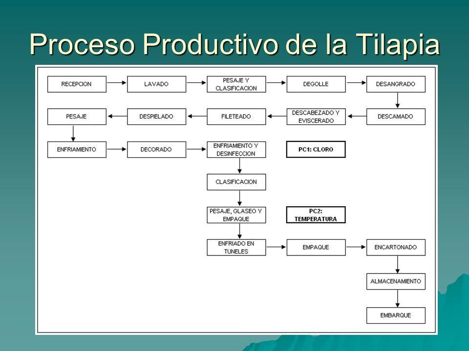 Proceso Productivo de la Tilapia