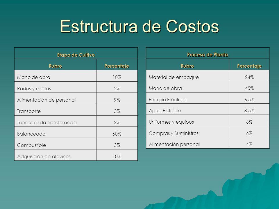 Estructura de Costos Etapa de Cultivo RubroPorcentaje Mano de obra 10% Redes y mallas 2% Alimentación de personal 9% Transporte3% Tanquero de transfer