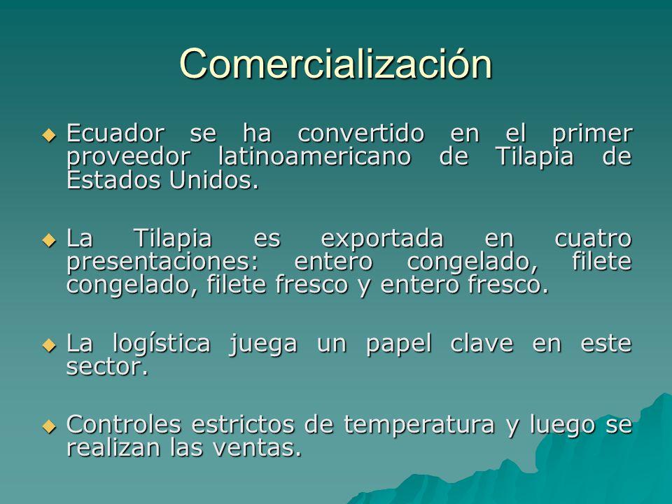 Comercialización Ecuador se ha convertido en el primer proveedor latinoamericano de Tilapia de Estados Unidos. Ecuador se ha convertido en el primer p