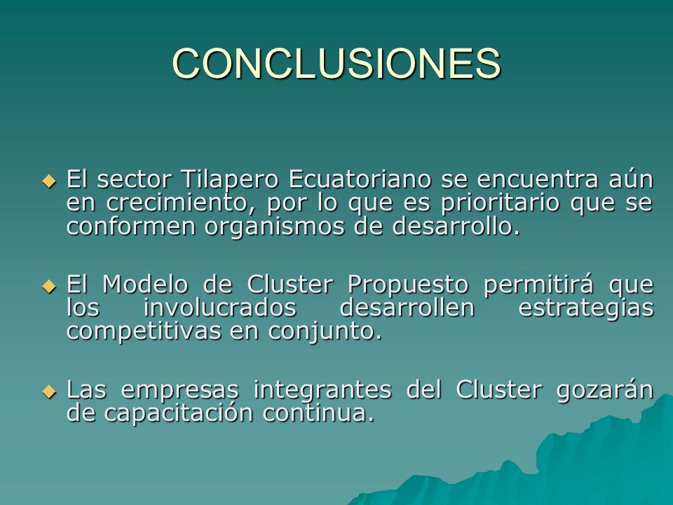 CONCLUSIONES El sector Tilapero Ecuatoriano se encuentra aún en crecimiento, por lo que es prioritario que se conformen organismos de desarrollo. El s
