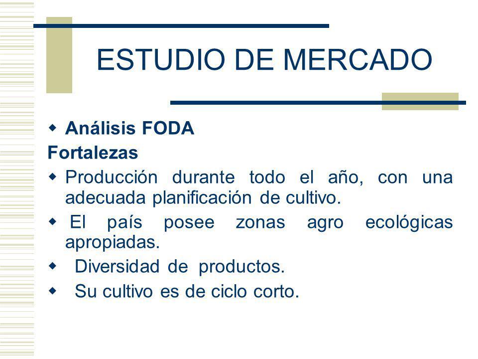 ESTUDIO DE MERCADO Análisis FODA Fortalezas Producción durante todo el año, con una adecuada planificación de cultivo. El país posee zonas agro ecológ