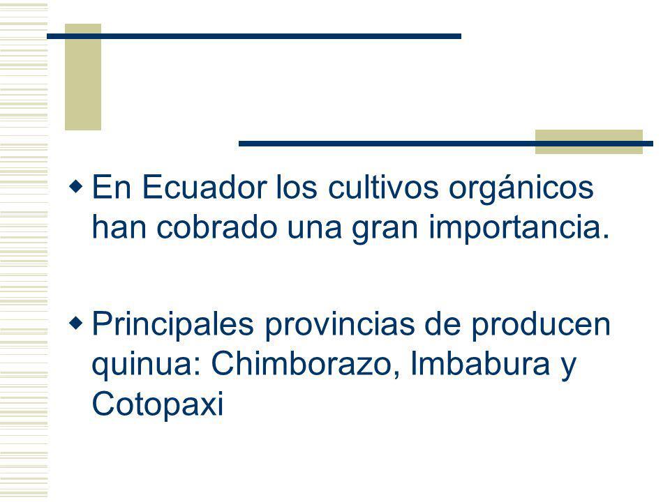 CARACTERISTICAS DEL PRODUCTO La quinua (Chenopodium quinoa wild) es originario de los Andes.