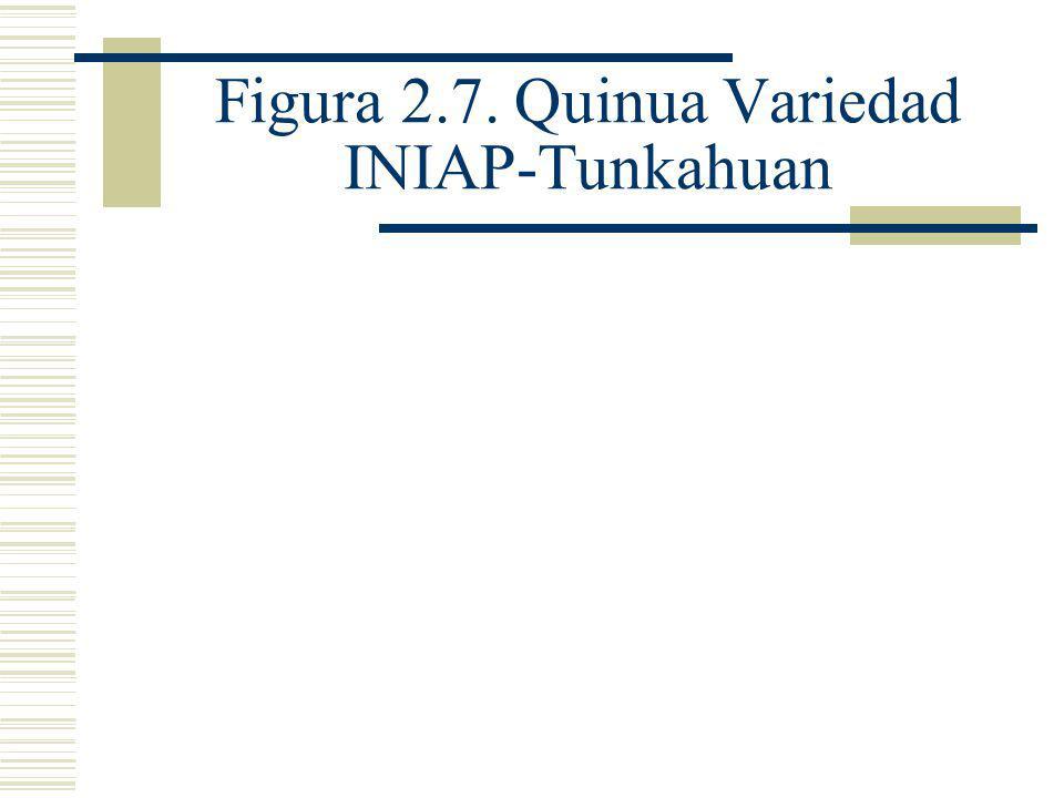 Demanda Nacional Se ha logrado cuantificar la demanda nacional de quinua desaponificada, está alrededor de 970 TM.