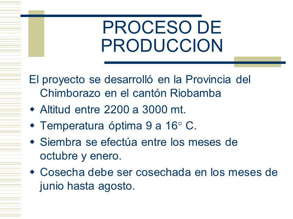 PROCESO DE PRODUCCION El proyecto se desarrolló en la Provincia del Chimborazo en el cantón Riobamba Altitud entre 2200 a 3000 mt. Temperatura óptima