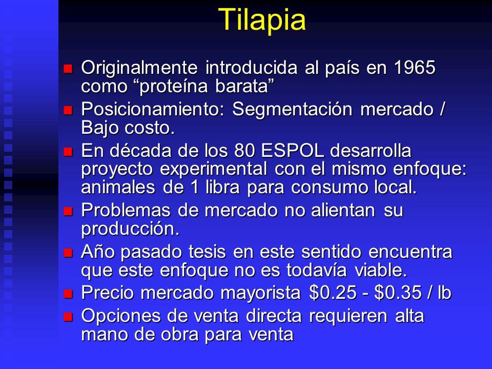 Tilapia Originalmente introducida al país en 1965 como proteína barata Originalmente introducida al país en 1965 como proteína barata Posicionamiento: