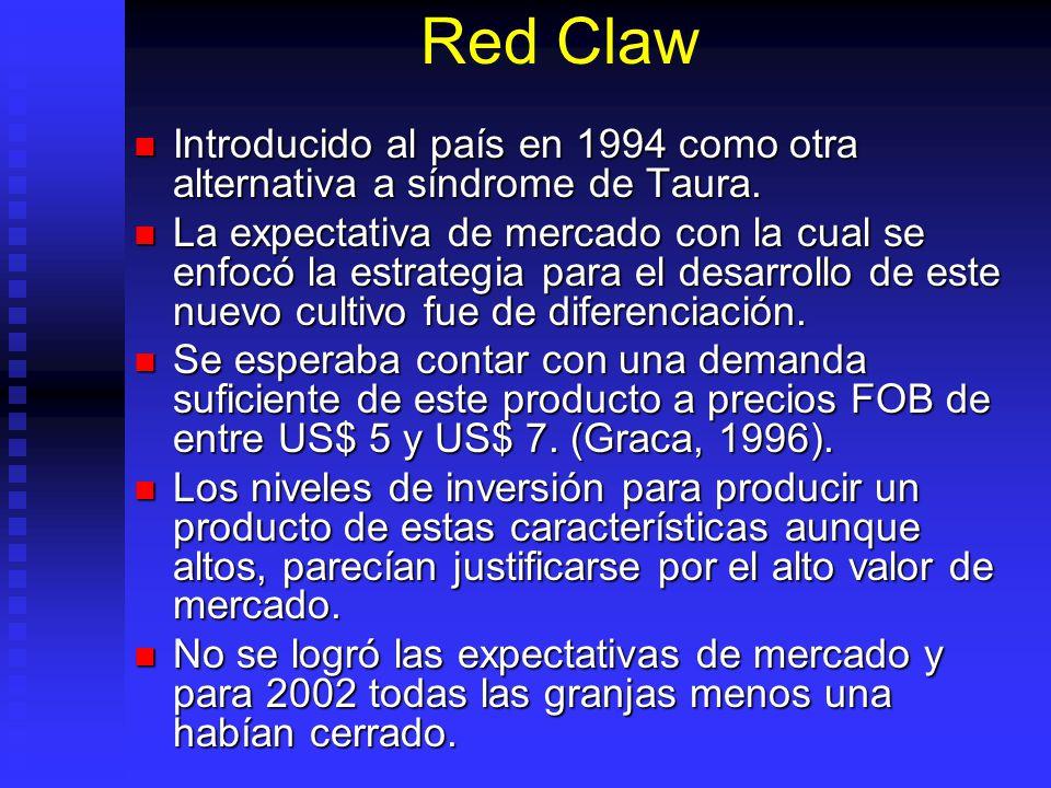 Red Claw Introducido al país en 1994 como otra alternativa a síndrome de Taura. Introducido al país en 1994 como otra alternativa a síndrome de Taura.