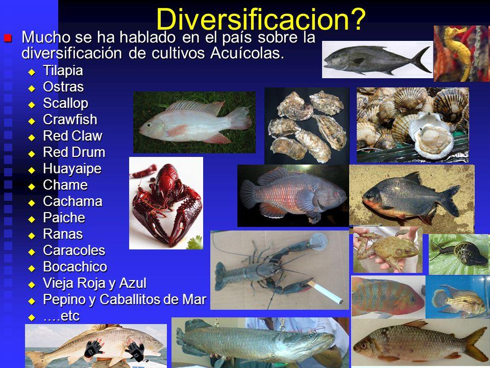 Introducción de Especies Especies nativas no siempre son conocidas en mercados internacionales.
