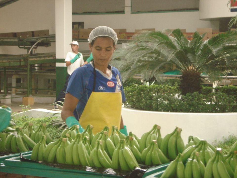 Guayaquil, noviembre de 2009 6 Diseño de un Sistema de Gestión y Control Operacional para una empresa de la Provincia de Manabí que se dedica a la producción de banano
