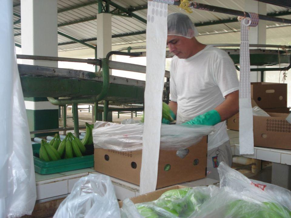Guayaquil, noviembre de 2009 7 Diseño de un Sistema de Gestión y Control Operacional para una empresa de la Provincia de Manabí que se dedica a la producción de banano