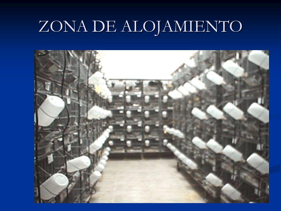 ZONA DE ALOJAMIENTO
