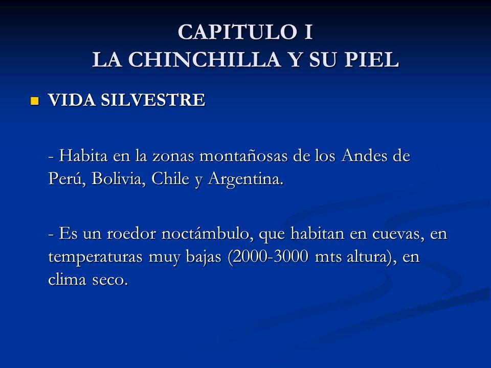 CAPITULO I LA CHINCHILLA Y SU PIEL VIDA SILVESTRE VIDA SILVESTRE - Habita en la zonas montañosas de los Andes de Perú, Bolivia, Chile y Argentina.